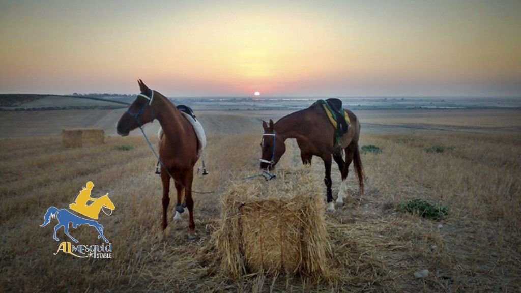 Rutas a caballo en Sanlúcar de Barrameda